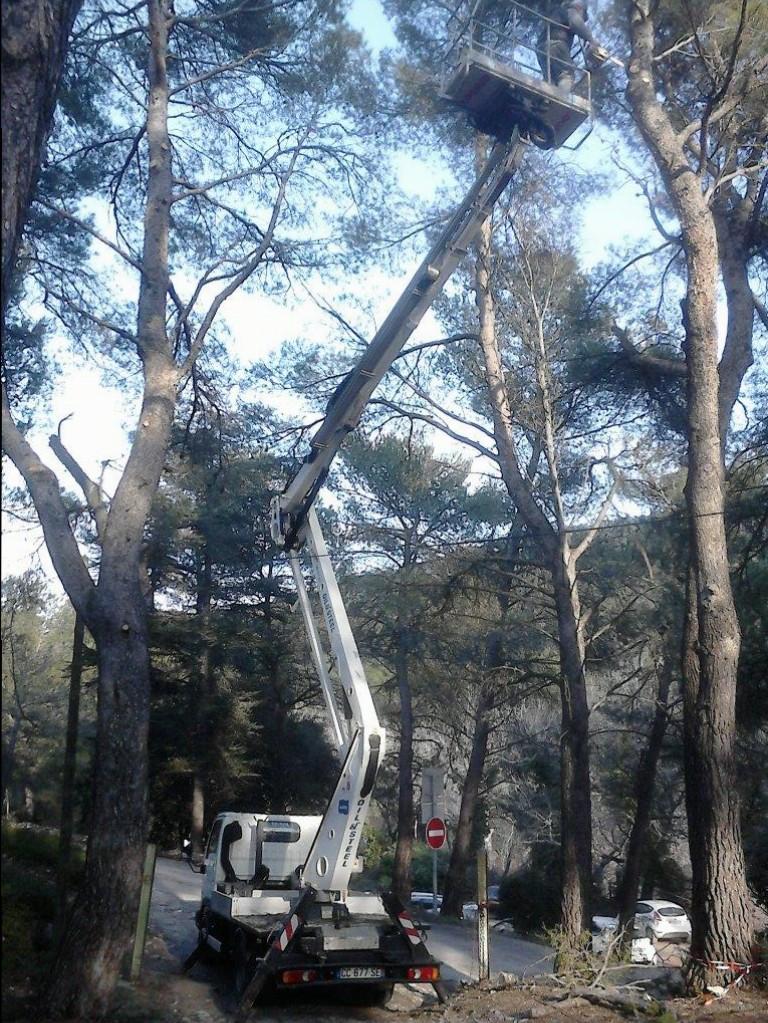 Une nacelle élévatrice a permis d'atteindre les branches qui menaçaient de tomber.